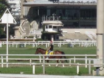PRIVATE CITY TOURS IN BA  HORSE RACE IN PALERMO BA City tours Buenos Aires